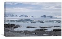 Gentoo penguins at Brown Bluff, Antarctica, Canvas Print