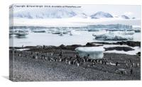 Penguins and icebergs, Canvas Print