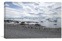 Gentoo penguins on the beach, Canvas Print