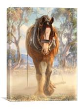 Clydesdale Solo, Canvas Print