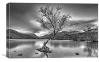 Llyn Padarn Lake, Canvas Print