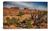 Capitol Reef, Canvas Print