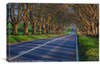 Beech Avenue, Badbury Rings, Canvas Print