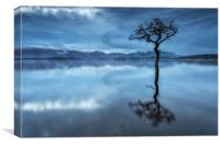 Milarrochy Tree, Canvas Print