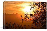 Sunrise looking through a hedge across a field in , Canvas Print