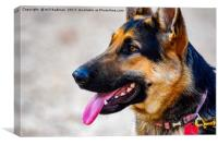 German shepherd dog in Yeovil Somerset Uk, Canvas Print