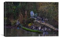 Heron and cormorants on a lake in Chard Somerset, Canvas Print