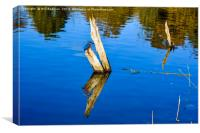Tree Reflection and kingfisher at Chard Reservoir, Canvas Print