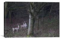 3 common fallow deers and 2 Melanistic Black deers, Canvas Print