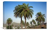 Haria - valley of 1,000 palms, Canvas Print