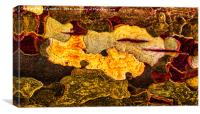 Tree Bark abstract , Canvas Print