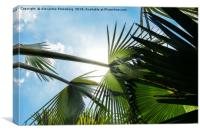 Lush tropical palm tree looking up perspective, Canvas Print