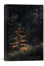 Last Autumn Tree, Canvas Print