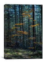 Autumn Contrast, Canvas Print