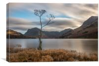 The Lone Tree at Buttermere, Canvas Print