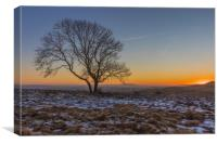 The Lone Tree at Malham, Canvas Print