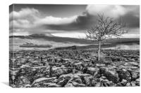 Southerscales in the Yorkshire Dales (mono), Canvas Print