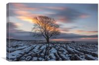 Lone Tree at Malham - Long Exposure, Canvas Print