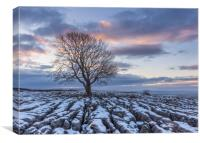 Sunrise at the Lone Tree at Malham, Canvas Print