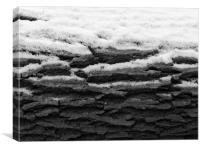 Snow on tree bark, Canvas Print