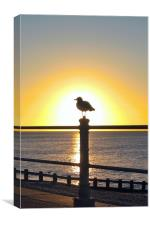 Seagull Sunrise, Canvas Print