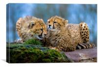 Cheetahs, Canvas Print