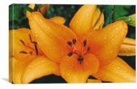 Tiger Lily, Canvas Print