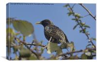 Starling on a perch