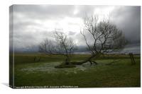 Stormy Nature