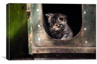 Scottish Wildcat Kitten, Canvas Print