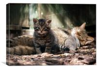 Scottish Wildcat kitten and mother, Canvas Print