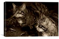 Scottish wildcats, Canvas Print