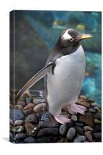 Gentoo Penguin, Canvas Print
