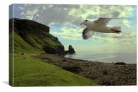 Fulmar flying at Talisker Bay, Canvas Print