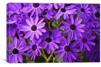 Purple daisies, Canvas Print