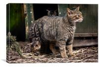 Scottish Wildcat and kittens, Canvas Print