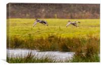 Ducks in Flight, Canvas Print