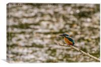 Kingfisher, Canvas Print