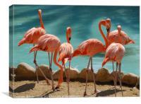 A group of Flamingos, Canvas Print