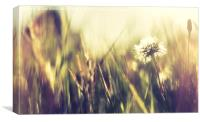 Abstract dandelion, Canvas Print