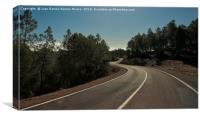 Road between trees, Canvas Print
