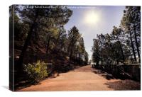 Strolling through pine forests, Canvas Print