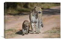 Leopard and cub, Canvas Print
