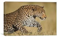 Leaping leopard, Canvas Print