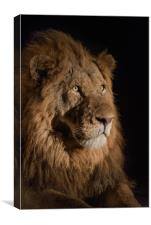 Golden King, Canvas Print