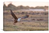 Fish eagle's flight, Canvas Print
