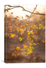 Mopane autumn, Canvas Print