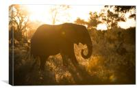 Sunspot elephant, Canvas Print