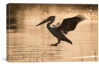 Pelican silhouette, Canvas Print