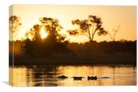 Hippos at sunset, Canvas Print
